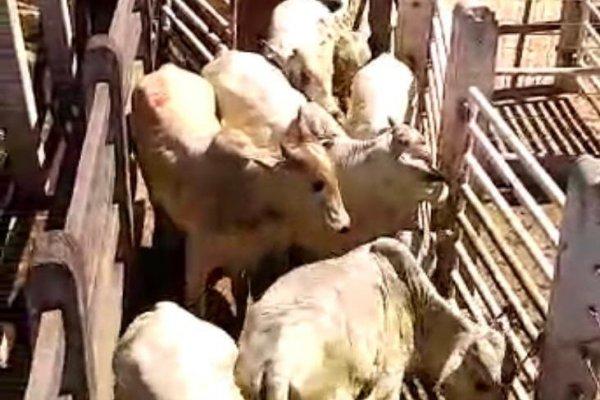 [Duas pessoas são presas por furto de animais avaliados em R$ 60 mil]
