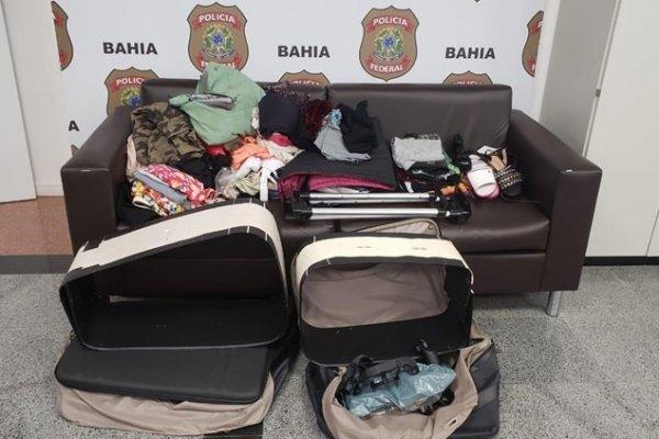 [Casal é preso transportando quase dez quilos de drogas escondidas em malas no aeroporto de Salvador]