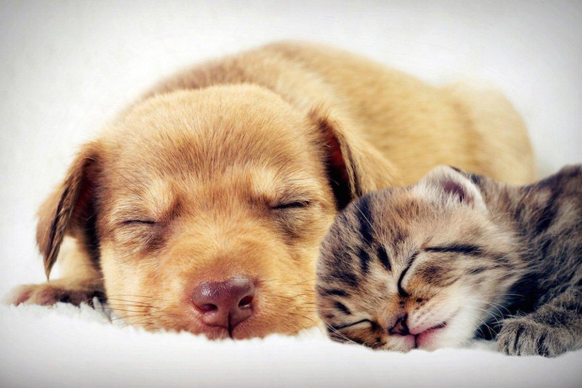 [Confira os cuidados com os pets durante o isolamento]