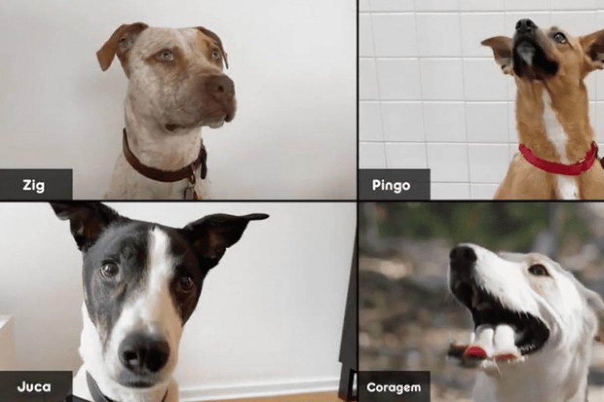 [Campanha promove adoção de animais por videoconferência]