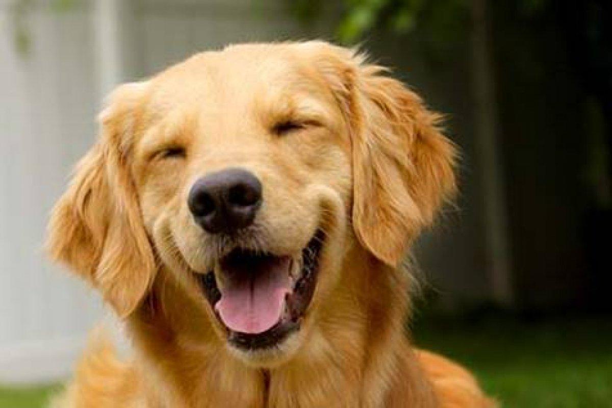 [Mitos e verdades sobre a saúde bucal dos cães ]