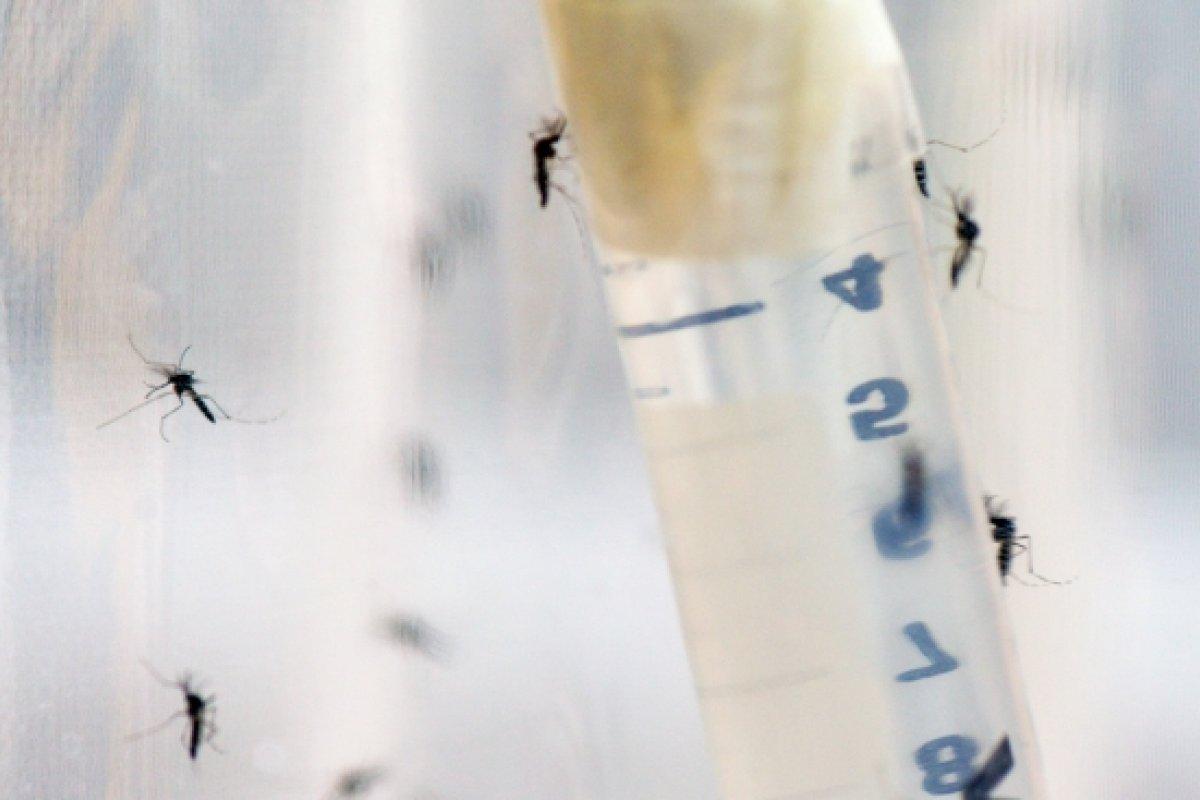 [OMS declara alerta sobre altos índices de dengue no Brasil]