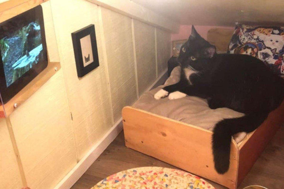 [Americano transforma espaço na parede em quarto de dormitório para gato de estimação]