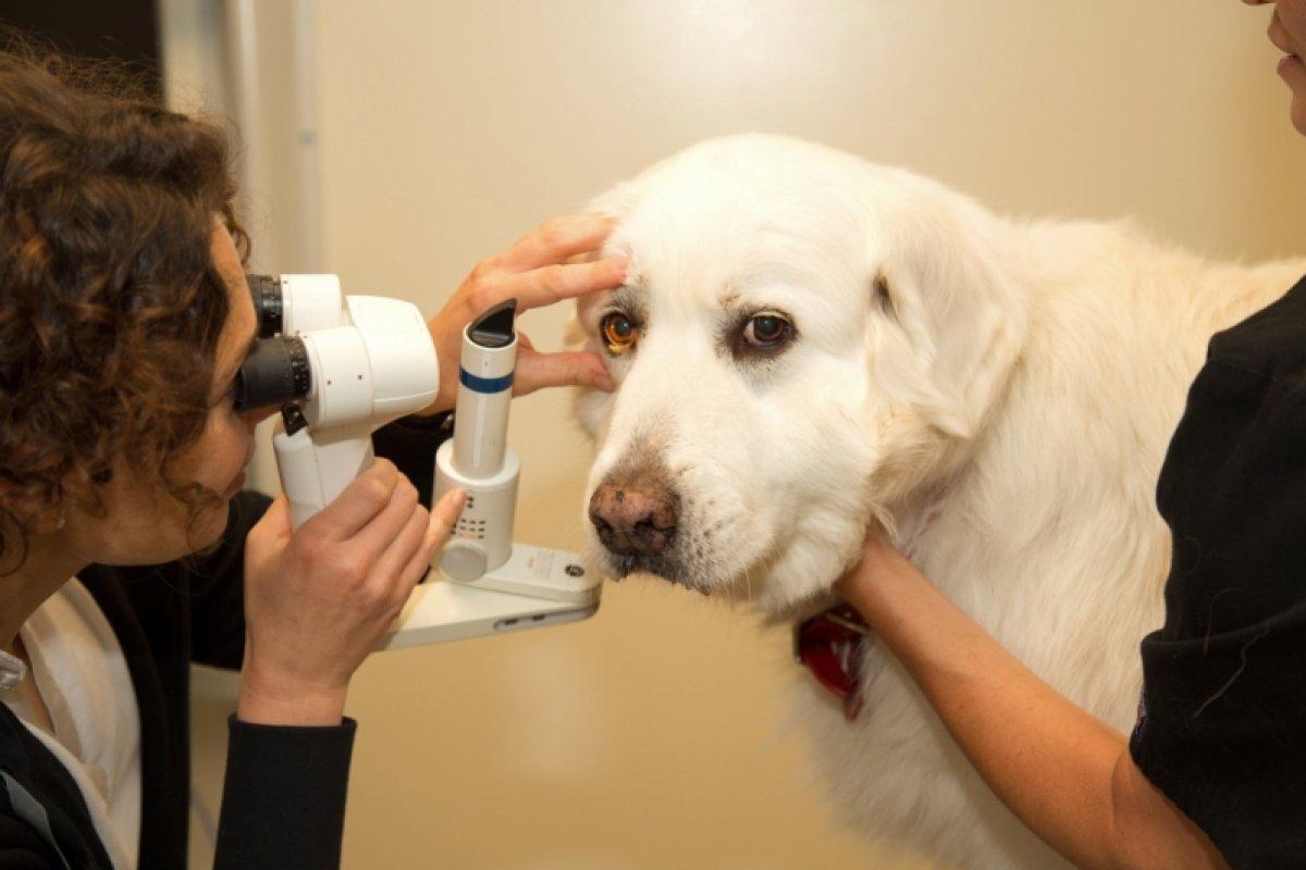 [Médica veterinária faz alerta para cuidados com a visão dos pets; confira]