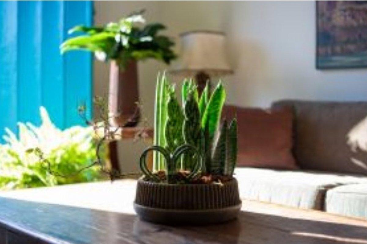 [Decorar o ambiente com plantas e flores naturais faz bem à saúde]