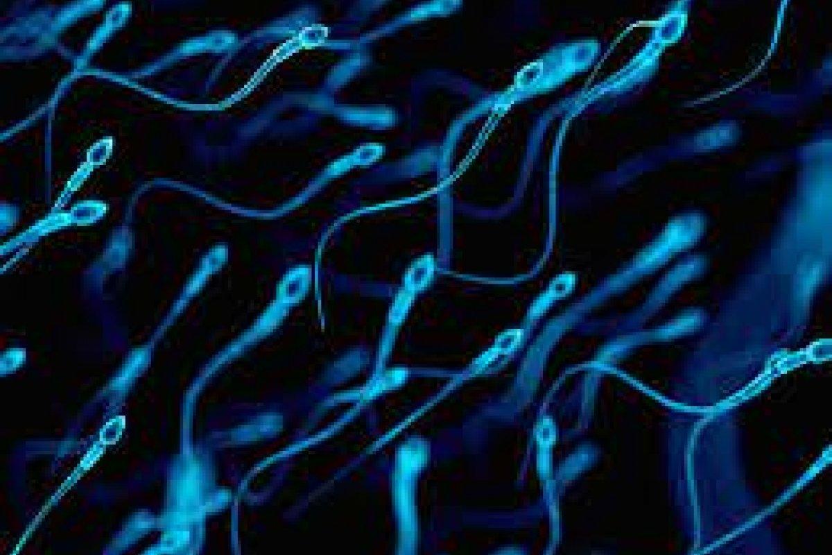[Segundo estudo, vacina contra a Covid não altera a qualidade do esperma humano]