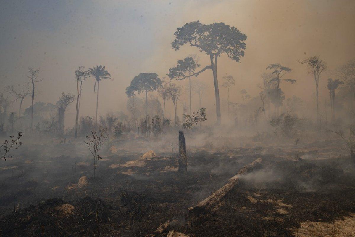[Amazônia: área desmatada em agosto é a maior para o mês de agosto em dez anos]