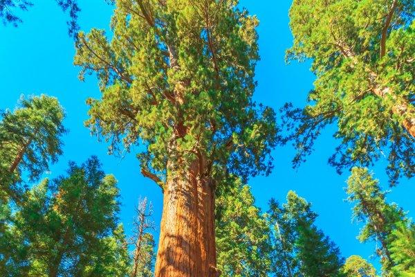 [Dia da Árvore: 5 árvores incríveis pelo mundo que viraram atração turística]